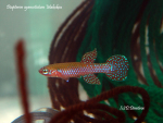 Thumbnail for fwkillifishe1618552348