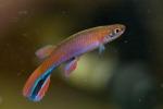 Thumbnail for fwkillifishe1618552483