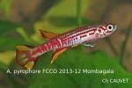 Thumbnail for fwkillifishe1618552617