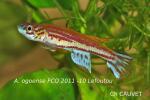 Thumbnail for fwkillifishe1618552635