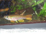 Thumbnail for fwkillifishe1618552731