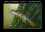 Thumbnail for fwkillifishe1618562872