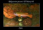 Thumbnail for fwkillifishe1618562989