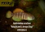 Thumbnail for fwkillifishe1618563070