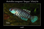 Thumbnail for fwkillifishe1618563114