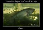 Thumbnail for fwkillifishe1618563333