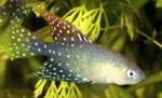 Thumbnail for fwkillifishe1618572608