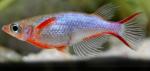 fwkillifishe&1620729020 Thumbnail