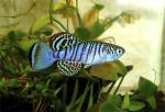 fwkillifishe&1620813602 Thumbnail
