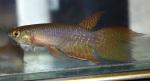 fwkillifishe&1620822009 Thumbnail