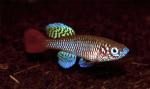 fwkillifishe&1620831434 Thumbnail