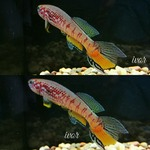fwkillifishe&1620839048 Thumbnail