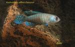 Thumbnail for fwkillifishe1628041249