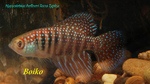 Thumbnail for fwkillifishe1628043883