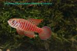 Thumbnail for fwkillifishe1628056794