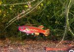 fwkillifishe&1632087213 Thumbnail