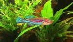 fwkillifishe&1632088396 Thumbnail