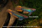 fwkillifishe&1632122244 Thumbnail