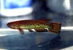 fwkillifishe&1632141603 Thumbnail