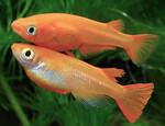 Thumbnail for fwkillifishe1634738410