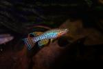 Thumbnail for fwkillifishe1634765210