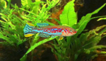 Thumbnail for fwkillifishe1634768931
