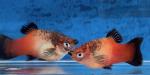 fwlivebearers&1576042212 Thumbnail
