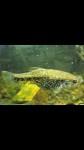 Thumbnail for fwlivebearersw1574074204