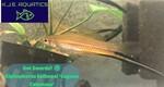 Thumbnail for fwlivebearersw1628550582