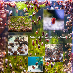 Thumbnail for fwsnails1611417210