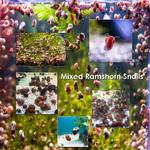 fwsnails&1628378789 Thumbnail