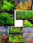 Thumbnail for liveplants1564529222