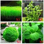liveplants&1596847478 Thumbnail