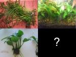 liveplants&1607216169 Thumbnail