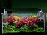 Thumbnail for liveplants1627919403