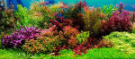 Thumbnail for liveplants1634762688