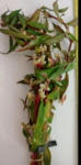 liveplantsb&1621387807 Thumbnail