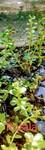 Thumbnail for liveplantsb1627948806