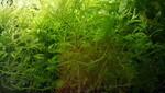 Thumbnail for liveplantsb1628476089