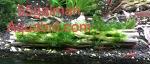 Thumbnail for liveplantsm1574079003