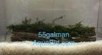 liveplantsm&1614411011 Thumbnail