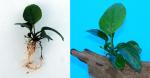 liveplantsr&1545097805 Thumbnail
