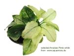Thumbnail for liveplantsr1583748604
