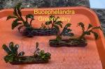 Thumbnail for liveplantsr1607448635