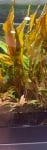 Thumbnail for liveplantsr1634760611
